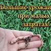 Дача.Природное земледелие. Дождевые черви.