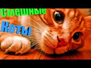 Смешные Коты и Кошки 2017 ТОПовая Подборка. Лучшие Приколы с Котами. Funny Cats Complation 2017