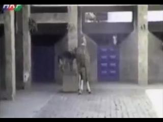 Тысяча чертей! Это моя лошадь