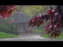 Дождь гром гроза Расслабляющие звуки природы Усыпляющие звуки летнего дождя