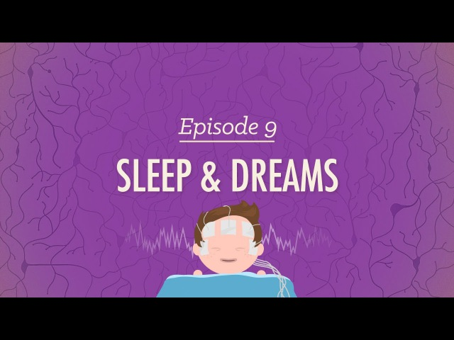 To Sleep Perchance to Dream Crash Course Psychology 9