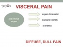 Типы боли в животе у домашних животных Abdominal Pain in Companion Animals