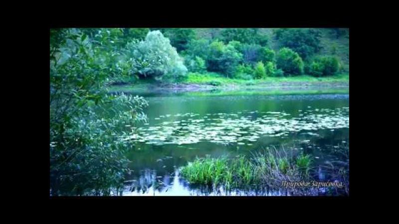 КРАСИВОЕ ВИДЕО Утренние ЗВУКИ ПРИРОДЫ и ПЕНИЕ ПТИЦ на реке для релакса и МЕДИТАЦИИ