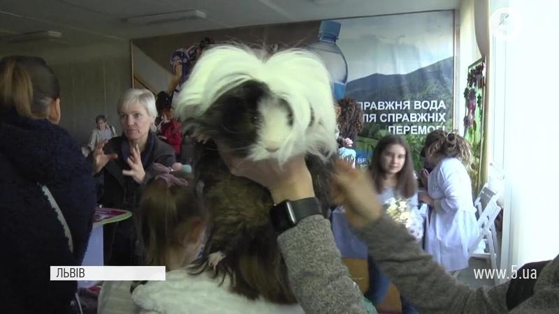Чорні і білі кучеряві чи без шерсті як обирали найкрасивішу морську свинку в Львові