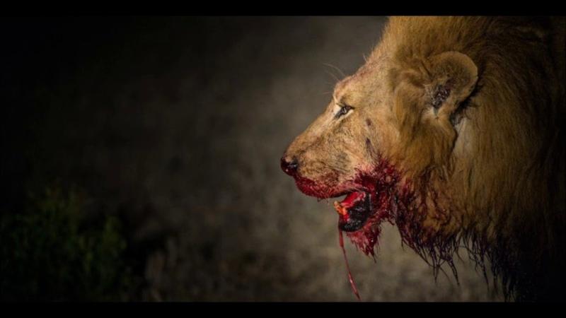 Doomriders - Lions (2009) Darkness Comes Alive