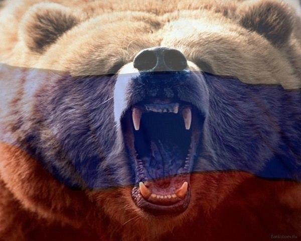 фото русского медведя на аву несколько дней набрал