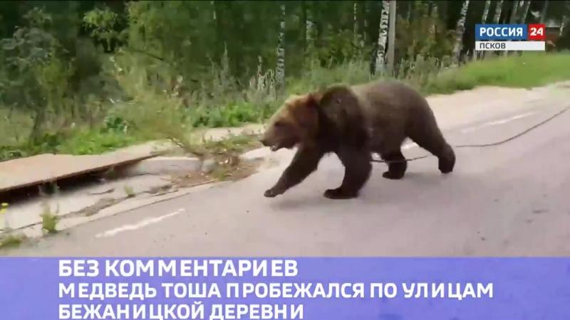 Медведь Тоша пробежался по улицам бежаницкой деревни