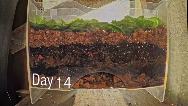 Layered worm bin 8 week time lapse FAST PLAYBACK vermicomposting