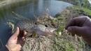 Первый Тест палочки Mottomo Eleganza MELS 662L 201см 2 10g на малой реке
