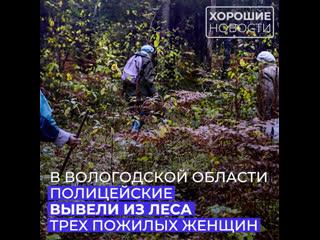 Вологодские полицейские спасли трех пожилых женщин, заблудившихся в лесу