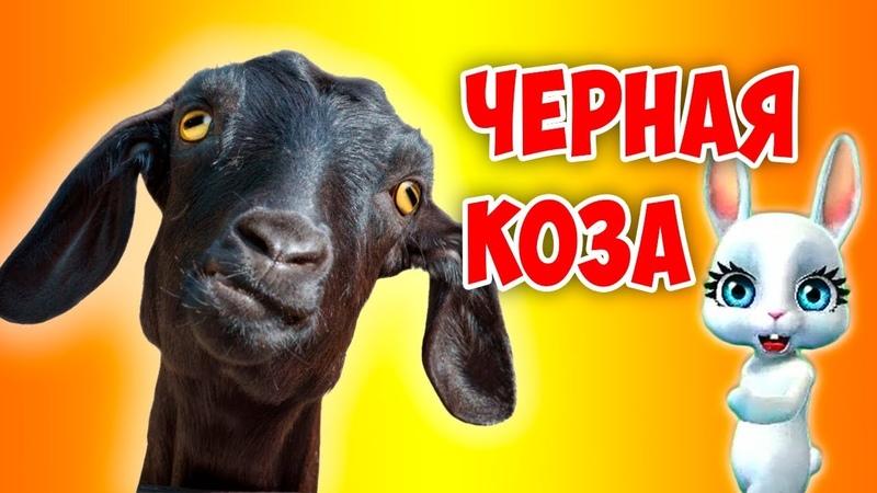 Черная Коза! Супер прикольная песня переделка попурри от ZOOBE Зайки Natali