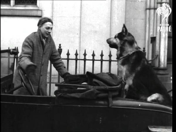 Stuffed Dog Aka Alsatian Car Dog (1940)