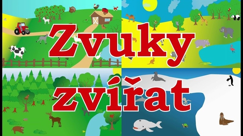 🇨🇿🐼Zvuky zvířat pro děti Zvířátka z farmy Zvířátka z lesa Zvířátka v ZOO Mořská zvířátka