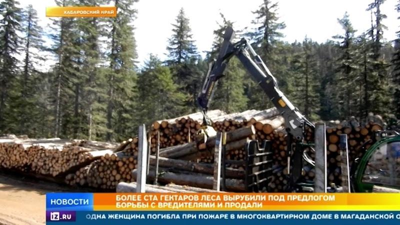 В Хабаровском крае власти вырубают и продают лес из благих намерений