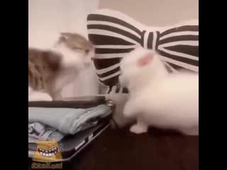 Махыч ми-ми-мишек () - ЯжеКОТ!