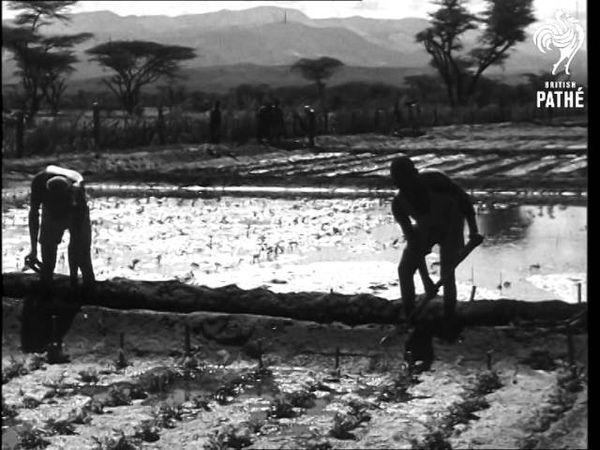 British M P's In Kenya 1954
