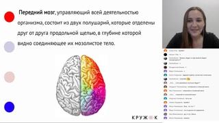 Центральная нервная система  | Онлайн-школа Кружок | ЕГЭ 2020