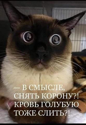 Фото №457246569 со страницы Катеринки Копыловой