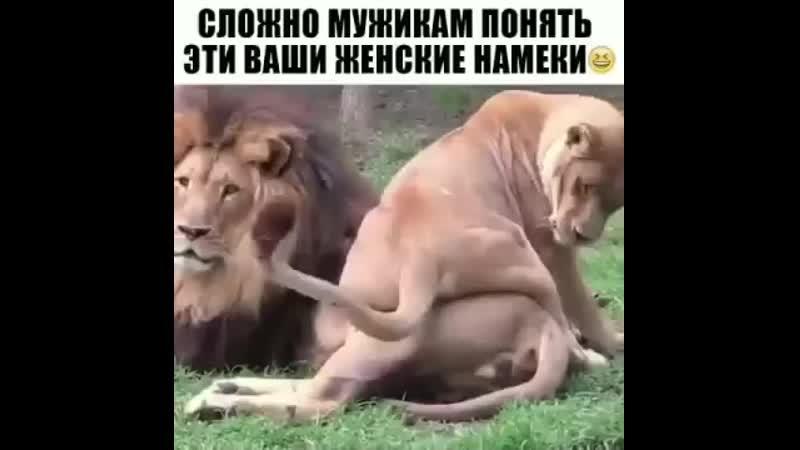Slozhno_muzhikam_ponjat_vawi_zhenskie_namjoki-spcs.me.mp4