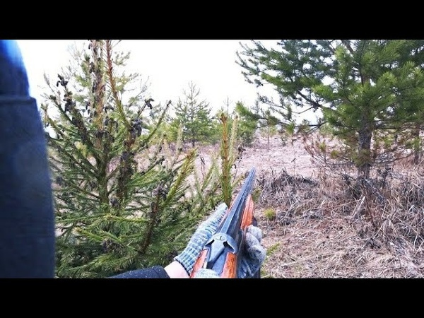 Тетерев на току. Охота на тетерева весной на току. Охота 2021.