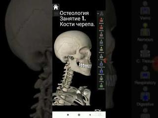 Кости черепа (Cranium). Краткая анатомия. Остеология занятие #1