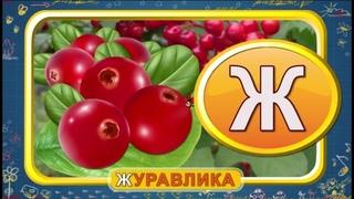 Мультипедия. Русский алфавит Буква Ж (Уроки тетушки Совы)