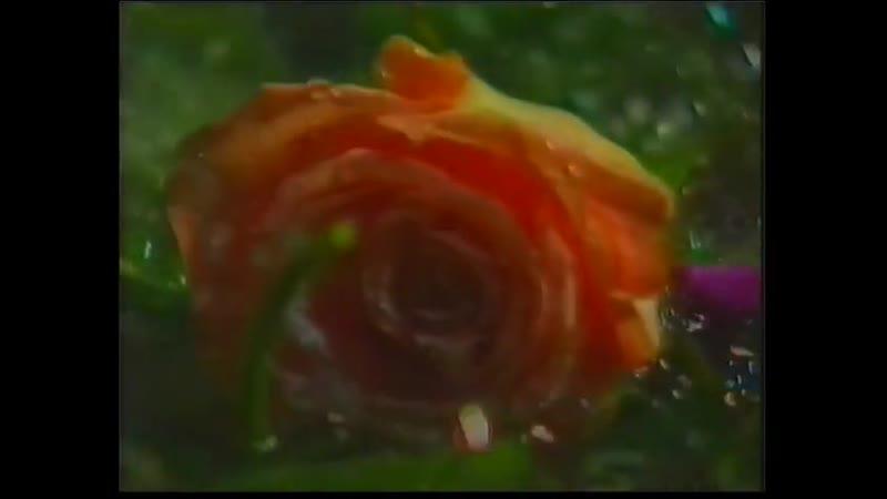 Coil Sara Dale's Sensual Massage 1992