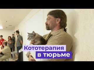 Котики и заключённые помогают друг другу в США