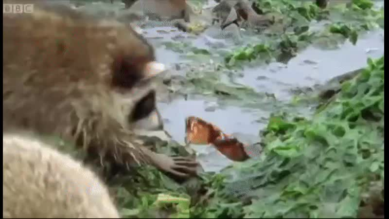 Animal Planet Gif