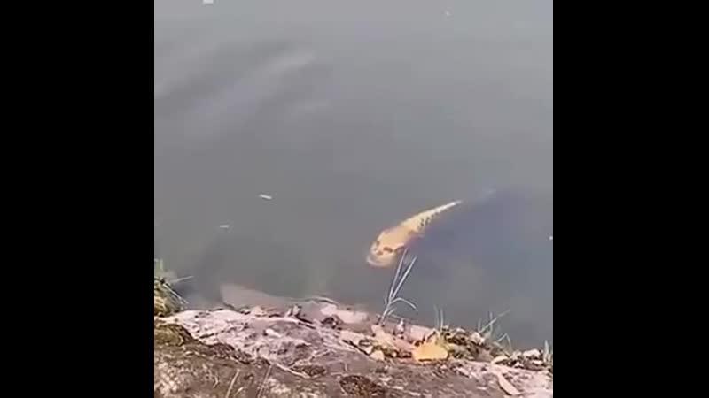 Вот это рыбка А если еще и накатить то как минимум эфект удвоится