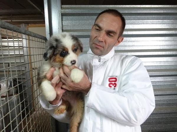 Une centaine de chiens sauvés par 30 Millions d'Amis dans un élevage près d'Angoulême