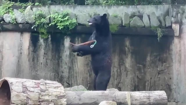 Kung fu grizzly