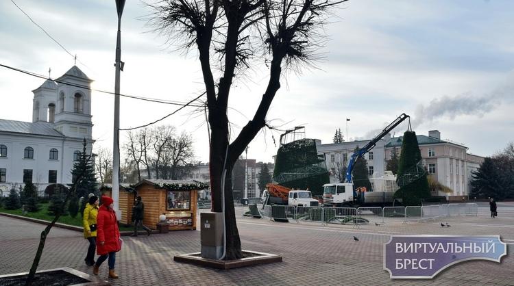 Брестчане спорят, какая ёлка предпочтительнее - живая или искусственная (и фото с пл. Ленина)