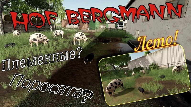 Farming Simulator 19. FS 19. Карта HOF BERGMANN MAP V1.0.0.4 ЛЕТО! РАЗВЁЛ СВИНАРНИК!))
