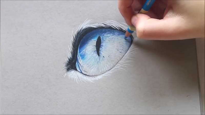 Realistic cat eye drawing with colored pencil Leontine van vliet