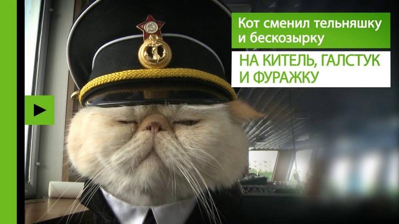 В мире людей кот Матрос несёт вахту на российском теплоходе