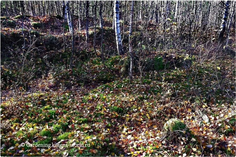 Лесные дары для выращивания садовых растений