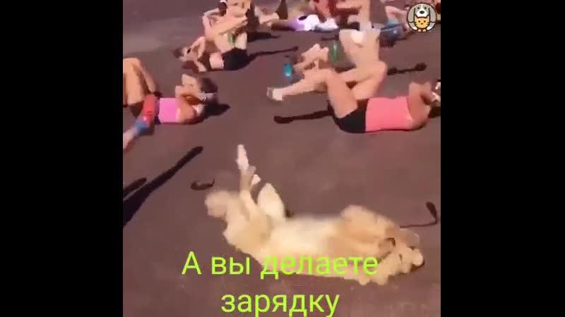 VIDEO 2020 01 30 10 11