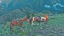 Montana DIY BEAR HUNT on Mules Horses
