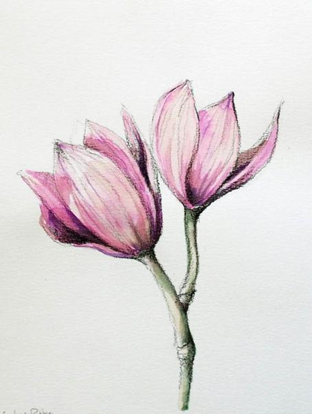 drawings of flowers - HD771×1024