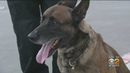 Police K-9 Leaps Through Shattered Car Window To Apprehend Pursuit Suspect