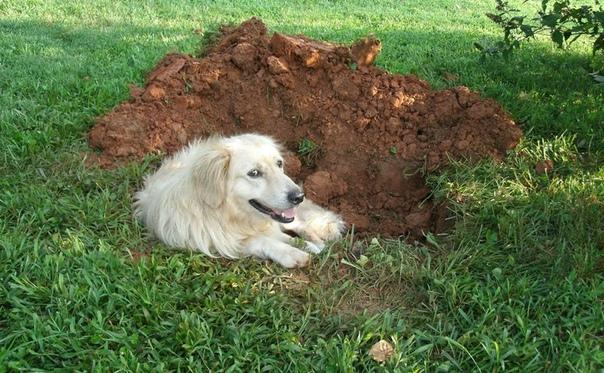 Народные приметы о земле: к чему собака роет ямы и другие поверья.