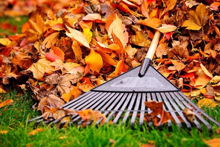 Сжигать нельзя оставить. Уборка опавшей листвы на участке, как это сделать правильно?