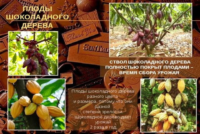 Познавательно- игровой час «Шоколаду каждый рад» (11 июля- Всемирный день шоколада)., изображение №3