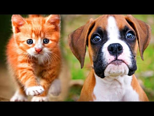 Котенок и щенок шли вдвоем по лесу спасать свою маленькую хозяйку... И в их глазах не было страха...