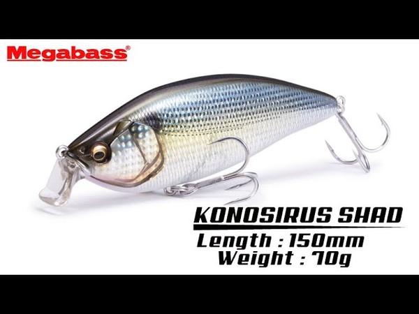 コノシロパターン特化型 マグナムサイズシャッドプラグ「KONOSIRUS SHAD」アクション動画。