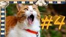 СМЕШНЫЕ КОТЫ Смешное видео про кошек, видео нарезка приколов 2021! выпуск 4
