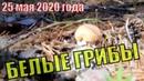 Сбор белых грибов 25 мая 2020 года. Урожай грибов в мае. Собираем Боровые грибы в мае 2020. Томск.