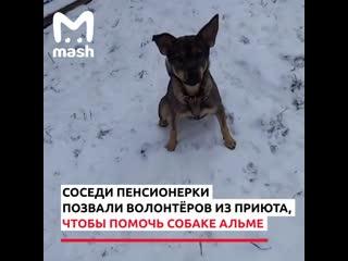 На волонтёров в Москве завели уголовное дело за спасённую собаку.
