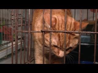 В Йошкар-Оле бездомные собаки и кошки получают шанс на благополучную жизнь